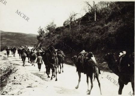 Fronte albanese. Cammelli carichi ...