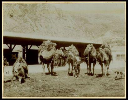 Crociera nei porti di Oriente. Maggio - giugno - luglio 1907. Smyrne: al Bazar, 15 luglio