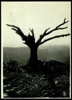 Un albero ancora intero sul Monte Santo