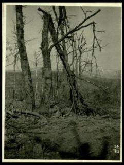 Bosco e trincee austriache sconvolte sul Vodice