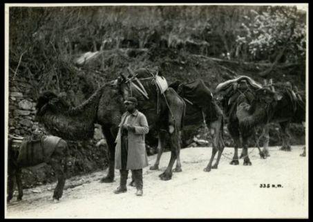 Cammelli in carovana in Macedonia