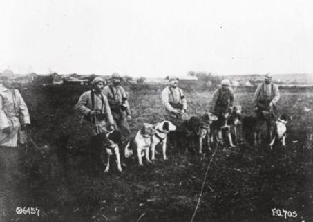 Soldati con cani