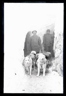 Soldati italiani con i cani da trasporto